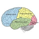 Ирритация срединных структур головного мозга. Основные признаки ирритации головного мозга. Осложнения и последствия
