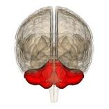 Отмирание нервных клеток головного мозга